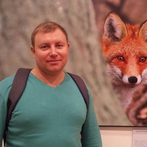 Александр, 37 лет, Железногорск