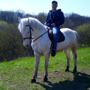 Андрей Валуев, 39 лет, Ростов-на-Дону